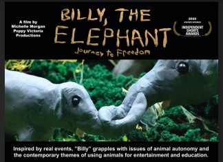 Billy, the Elephant