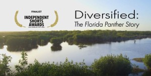 Diversified: The Florida Panther Story